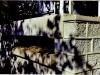 19-lintel-over-terrace-drip-stone-2-november-1-02